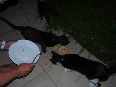 Katzenfütterung