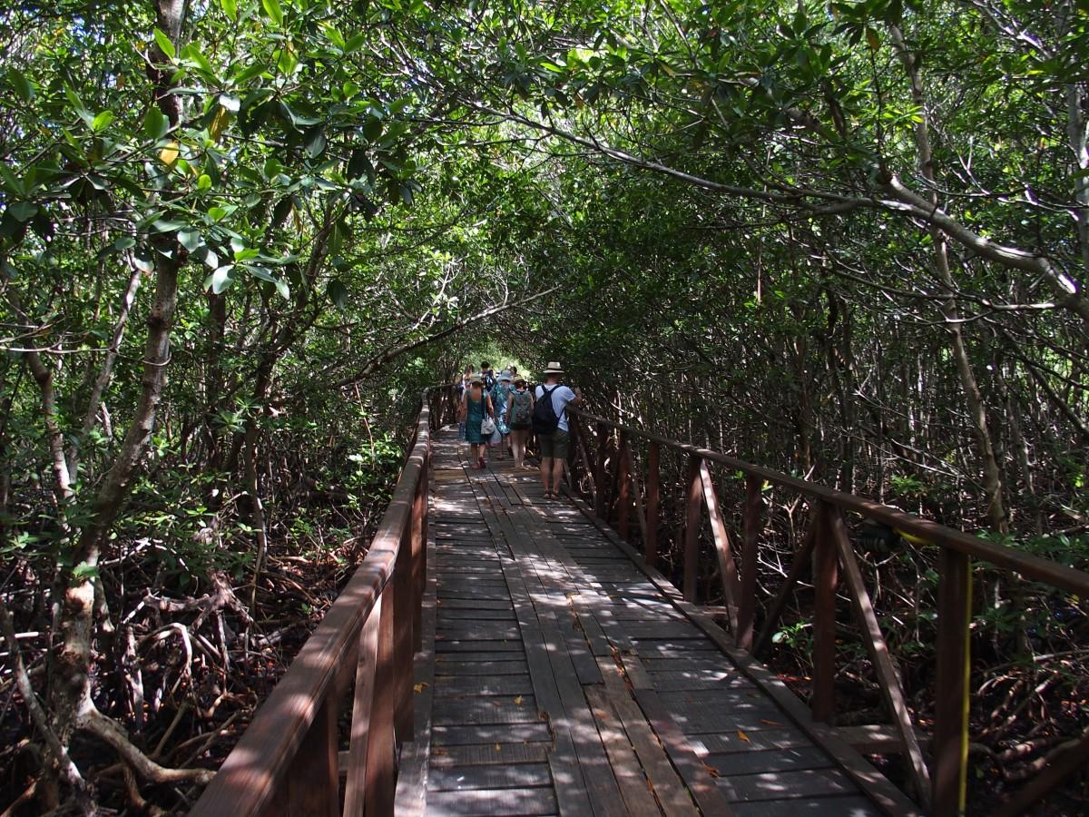 Bohlenweg durch die Mangroven